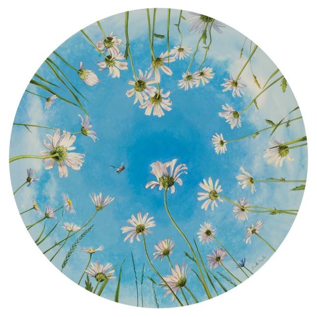 Oxeye Daisies.jpg